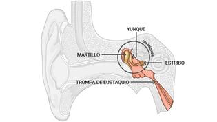 Audiolab centro auditivo - El oído medio